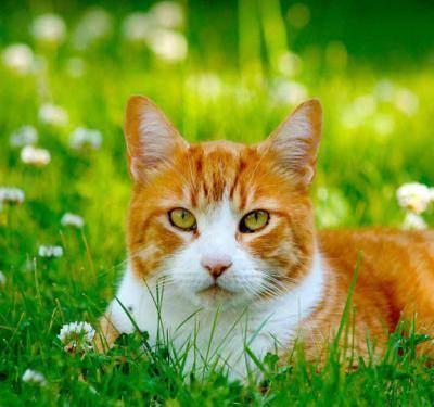 Что делать, если кот сильно линяет: 4 причины и решения