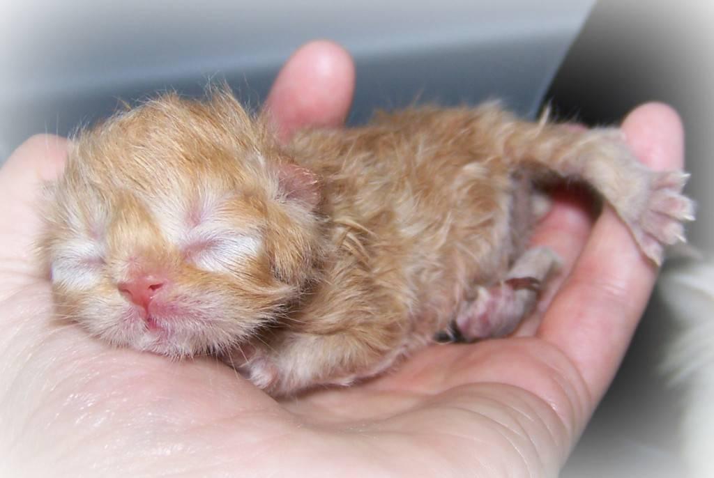 Почему не открывается глаз у котенка и как помочь малышу?