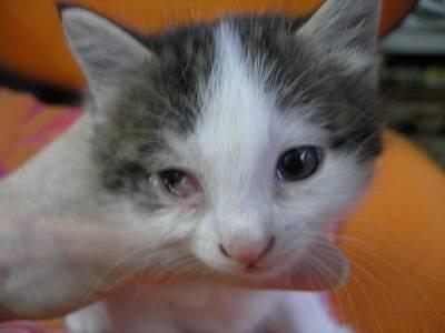 4 причины почему у котенка не открываются глаза