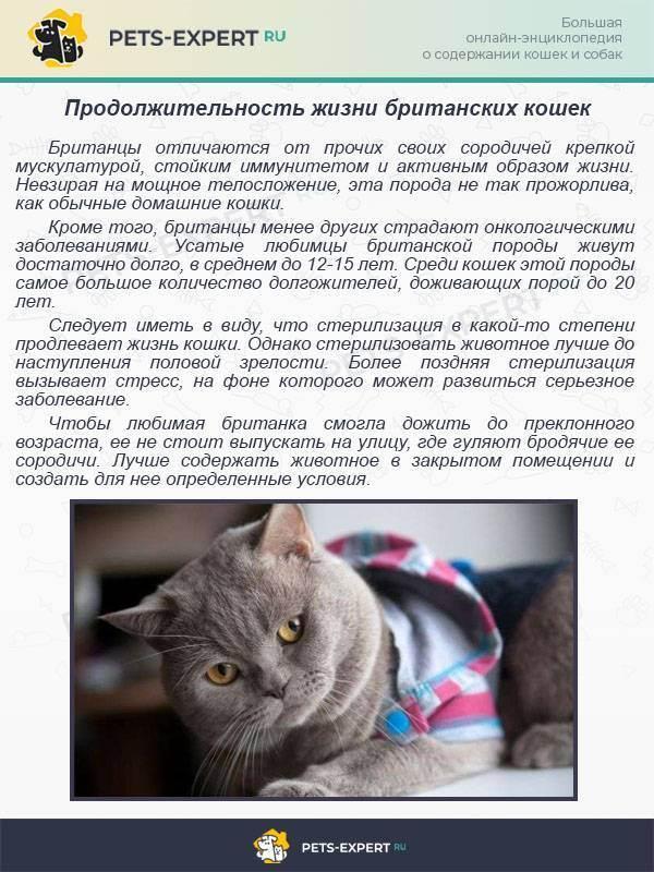 Сколько живут кошки британской породы в дома