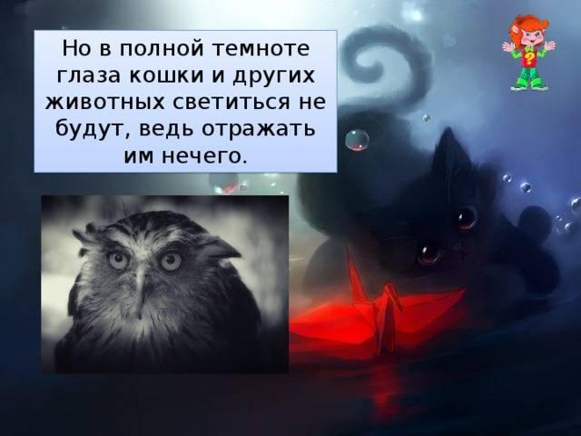 Почему у кошки светятся глаза в темноте? — surwiki