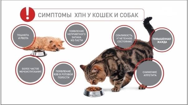 Почечная недостаточность у кошек и котов | лечение, как вылечить