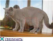 У котенка курдюк на животе