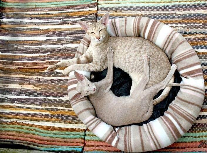 Pokupka-mashiny-s-ruk - запись пользователя ирина (irulenciya) в сообществе домашние животные в категории помогите советом - babyblog.ru