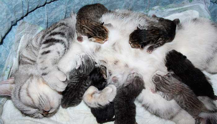 Тепловой удар у кошек: симптомы и что делать | кот и кошка