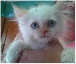 Что делать, если котенок постоянно чихает?