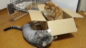 Кошка много ест (переедание) - симптомы, лечение, препараты, причины появления | наши лучшие друзья