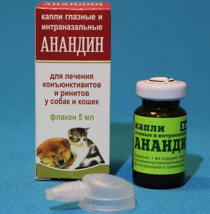 Глазные капли для кошек: обзор популярных препаратов и способы их применения