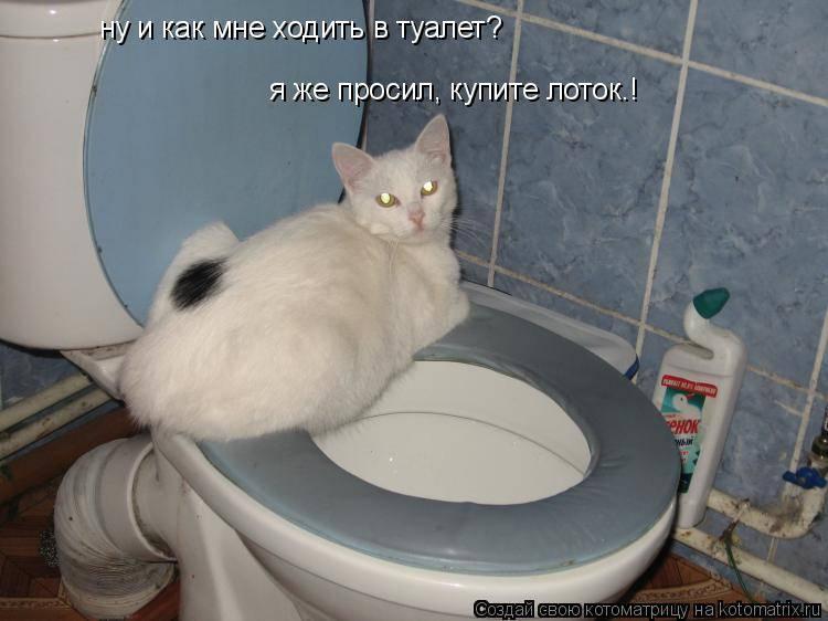 Почему котенок мяукает, когда ходит в туалет по-большому или перед этим?