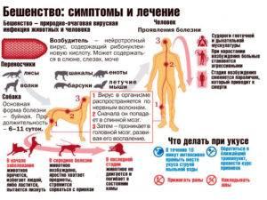 Укусы домашних и уличных кошек: симптомы бешенства, варианты как лечить