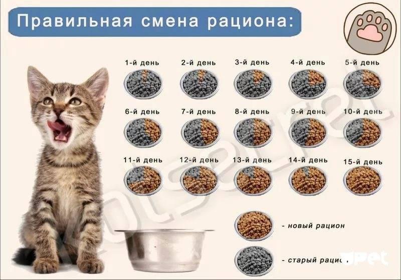 Сколько раз в день должен писать кот