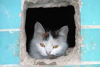 Место для котенка, как правильно подготовить квартиру к появлению котенка в семье - любимчики.ру