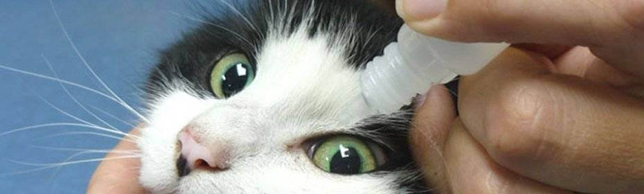 Почему у кошки темные выделения из глаз, как лечить питомца?