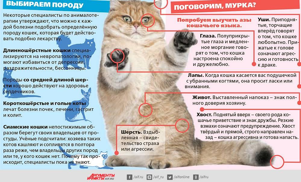 Остеохондродисплазия у шотландских вислоухих кошек: приговор или возможность жить полноценно