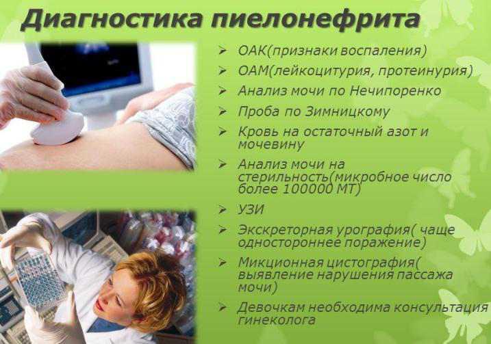 Болезни почек у кошек (почечная недостаточность, пиелонефрит, гломерулонефрит)