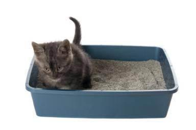 Наполнители для кошачьего туалета: разновидности и тонкости использования