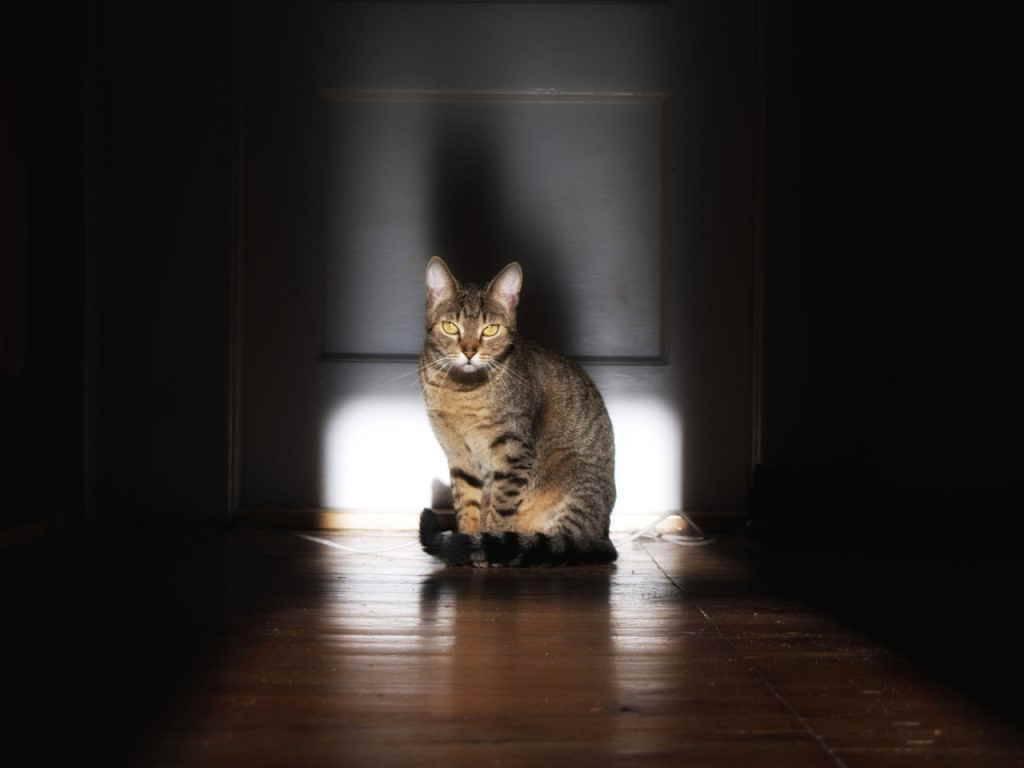 Кошка смотрит в стену заболевание. причины почему ваш питомец упирается головой в стену