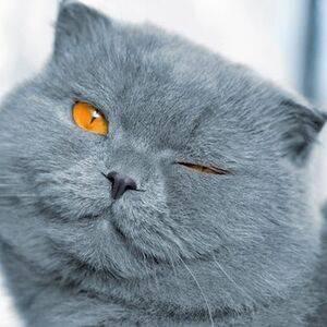Кошка без причины сильно худеет - симптомы, лечение, препараты, причины появления | наши лучшие друзья