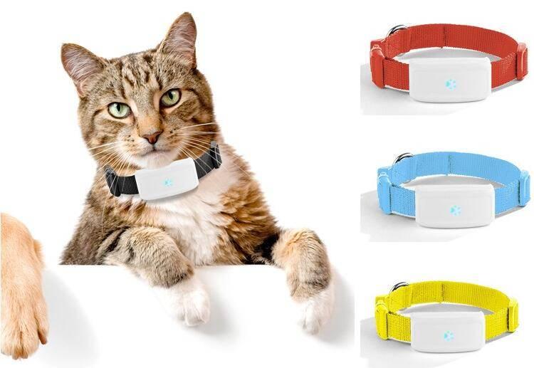Ошейники для кошек и котов: разновидности с gps, с феромонами, декоративные и другие, как правильно выбрать, как приучить питомца