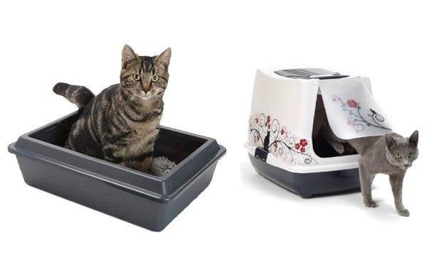 Правила использования кошачьего лотка с решеткой и секреты приучения к нему