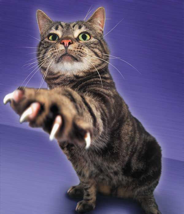 Как правильно подстричь когти коту в домашних условиях
