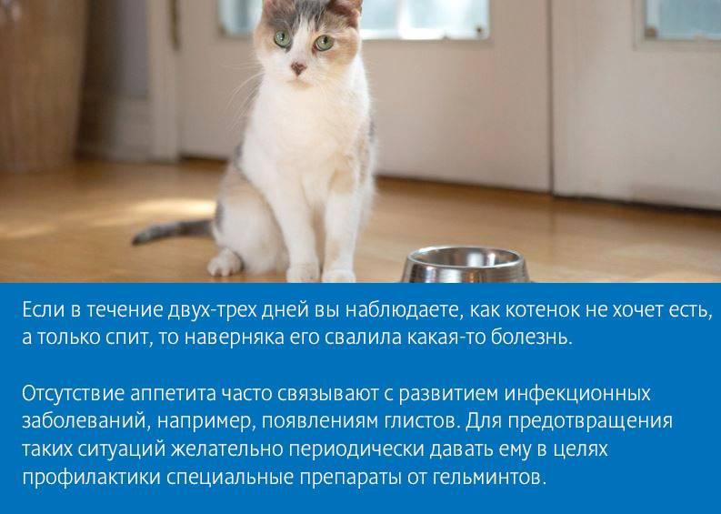 Почему у кота пропал аппетит