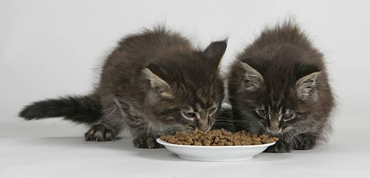 Можно ли кошке давать кефир