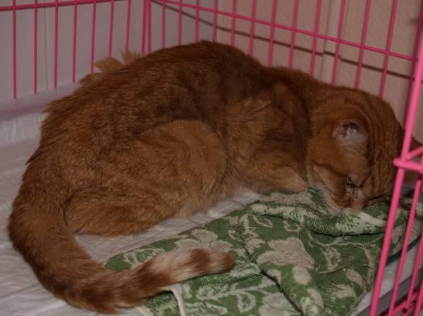 Признаки почечной недостаточности у кошки: способы лечения и прогнозы