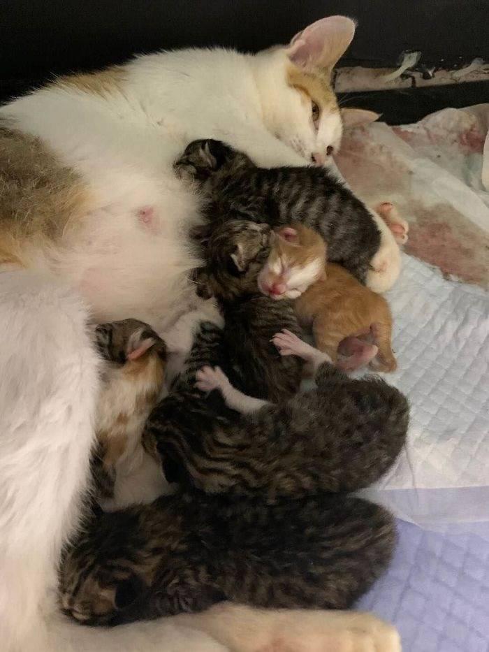 Что значит сон про рождение котят – 43 разных значений