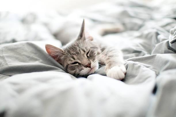 Домашняя своя кошка