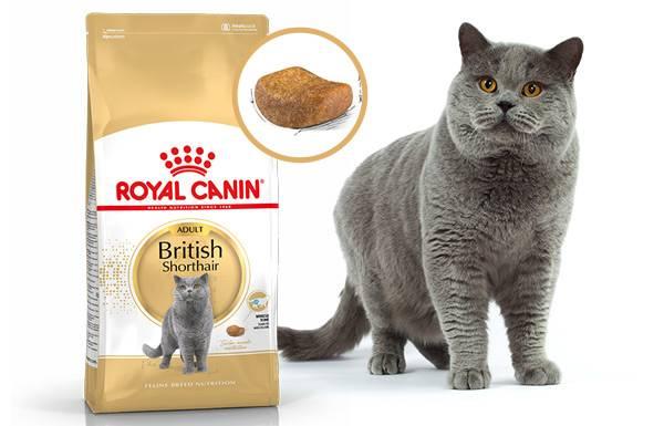 Чем кормить британского котенка?