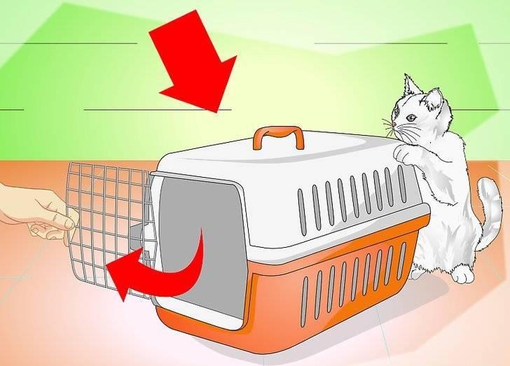 Как приучить котенка к рукам: основные правила как приучить котенка к рукам: основные правила