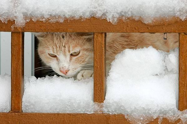 Мерзнут ли кошки зимой - oozoo.ru