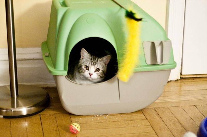 Как выбрать туалет для кота, какие они бывают: автоматические, закрытые, домики, лотки, с бортиком и без него