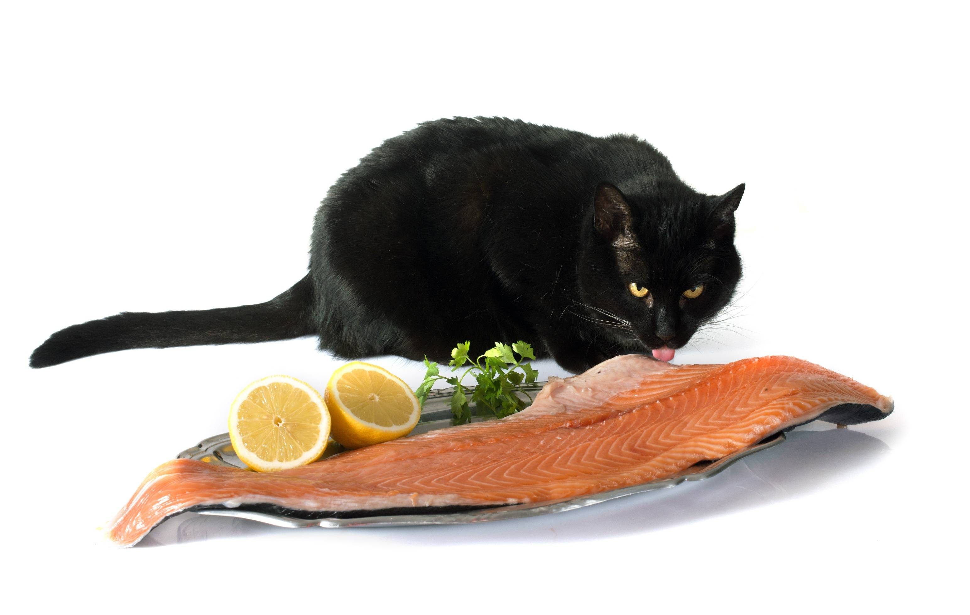 Почему кошкам нельзя рыбу и чем грозит ее избыток в рационе