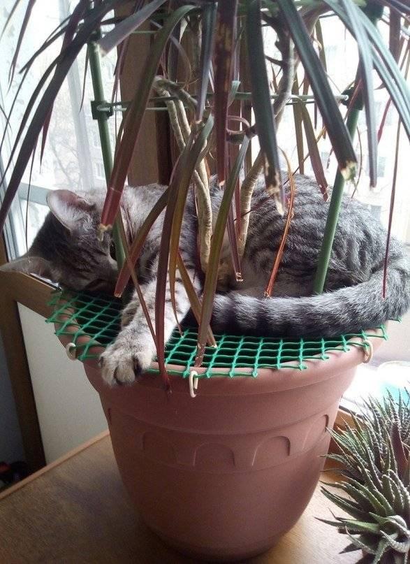 Как уберечь цветы от кошки?