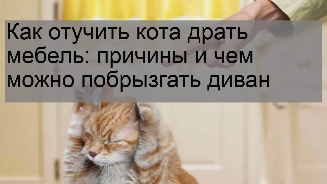 Как отучить кошку драть обои: основные средства и методы