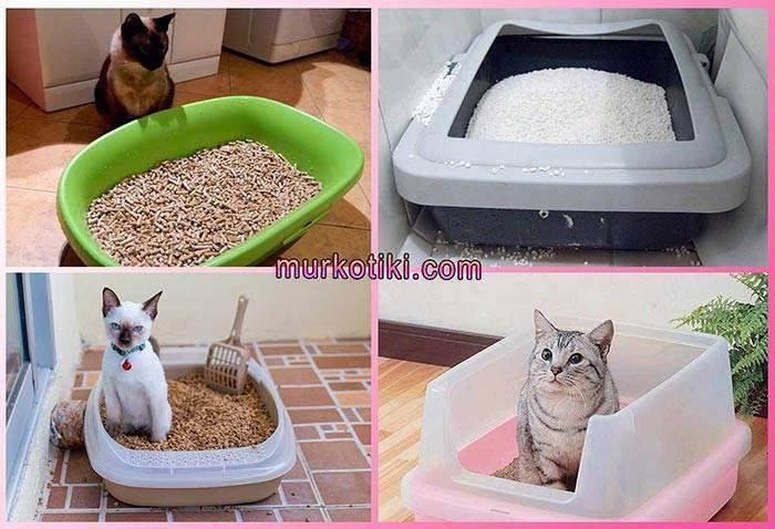 Zakrytyi-tualet-dlya-koshki - запись пользователя наташа (id1769647) в сообществе домашние животные в категории кошки. болезни, прививки, советы по уходу - babyblog.ru