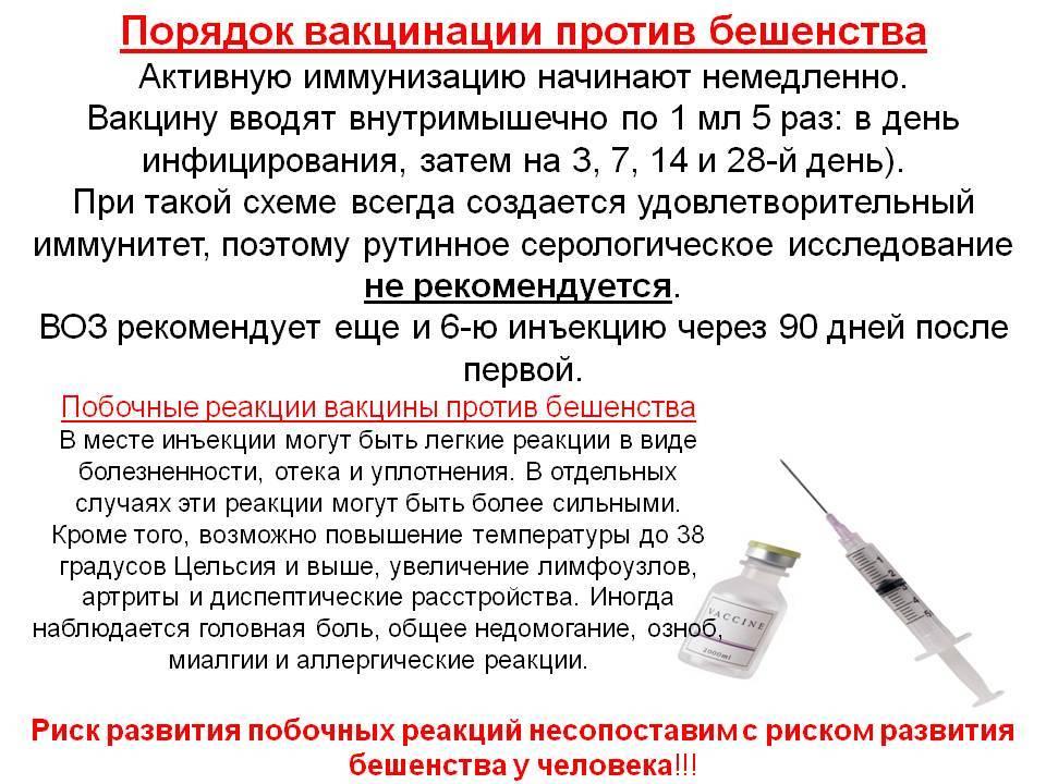 Как часто делают кошкам прививку от бешенства: сроки, периодичность