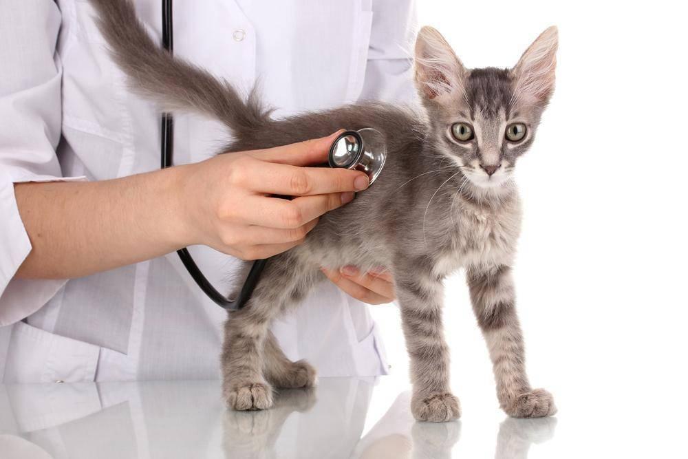 Почему кот чихает часто и как лечить - муркин дом