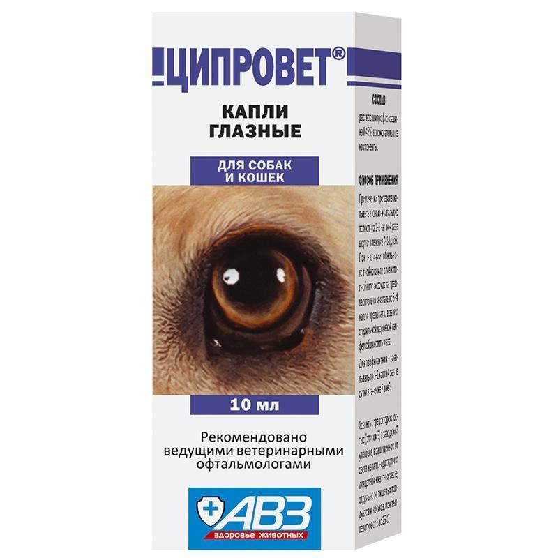 Препаратыобзор капель левомицетин для кошек