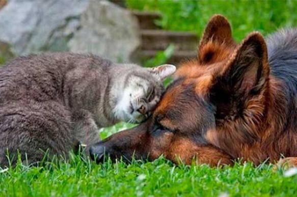 Какие собаки уживаются с кошками в одном доме?