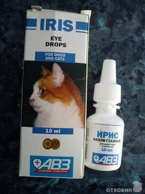 Чем вылечить насморк у кота в домашних условиях: разновидности насморка, средства народной медицины, препараты