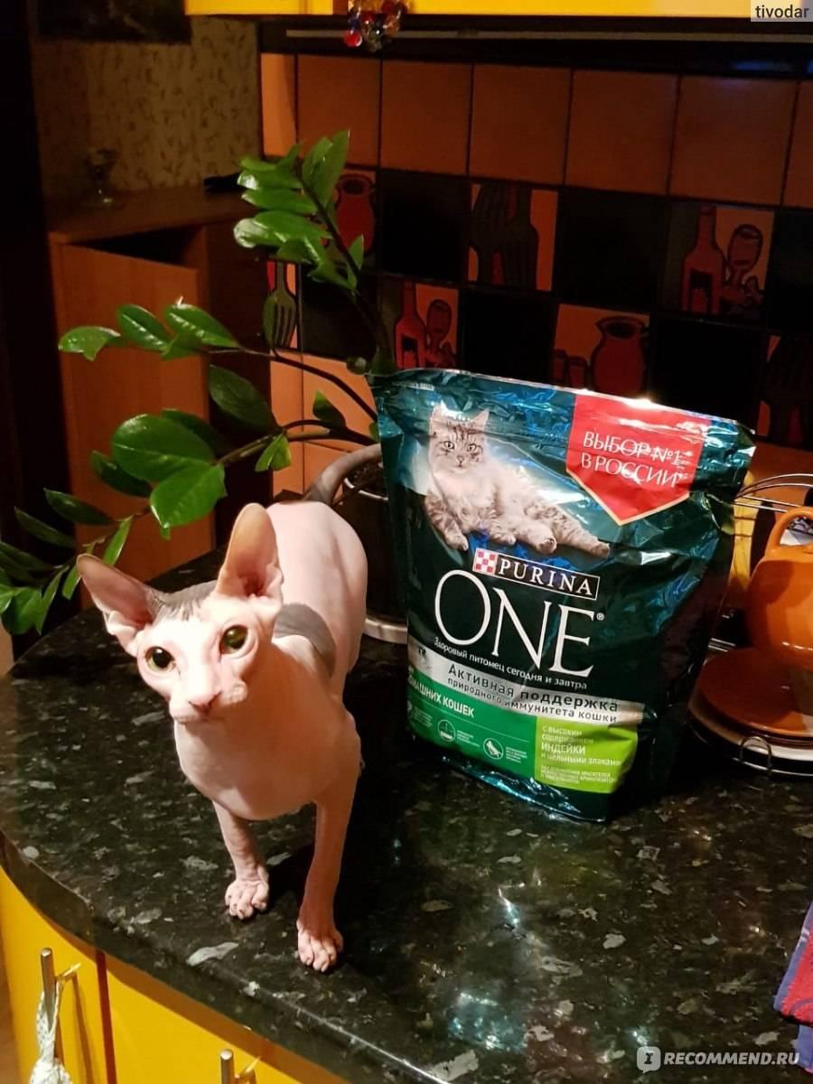 Чем кормить сфинкса - канадского, лучшие корма, меню для взрослых кошек и котят, отзывы
