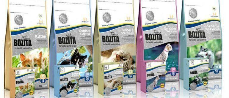 Характеристика сухого корма холистик для кошек и котят