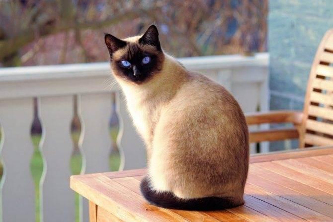Кошачьи глисты, какие бывают, как выглядят и заразны ли для человека: видео