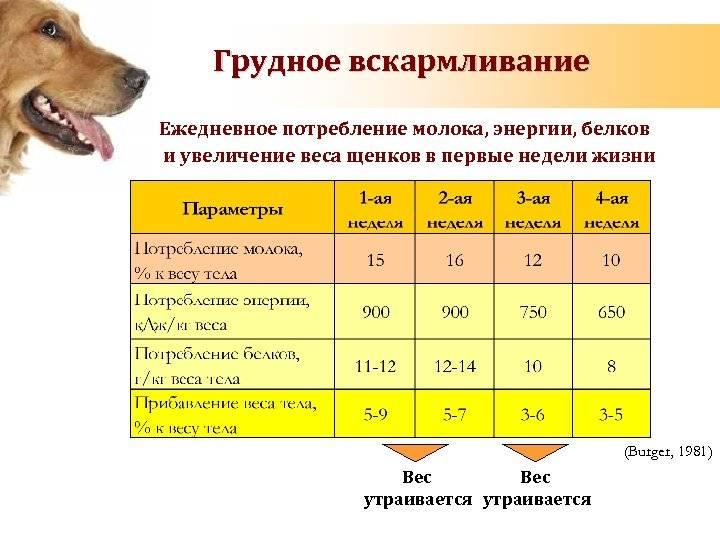 Сколько живут собаки разных пород и от чего зависит продолжительность их жизни