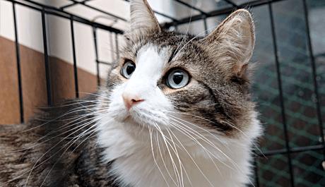 Беззерновой корм для кошек: корма супер-премиум-класса, польза и вред. рейтинг лучших сухих лечебных беззерновых кормов