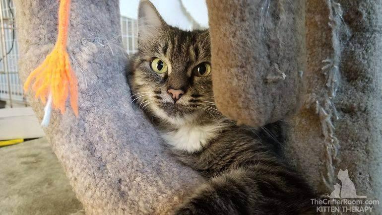 Когда у кошки после родов появляется молоко, что делать и чем кормить котят, если его нет?