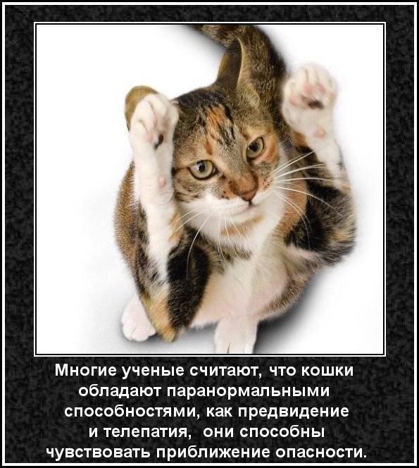 Интересные факты о кошках и котах